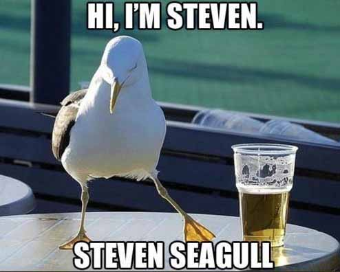 Steven Seagull