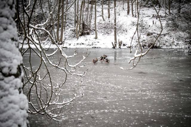 Frozen-trello-web